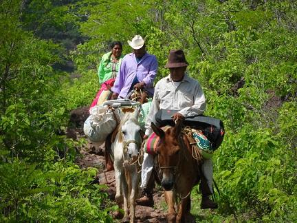 Cora men riding mules